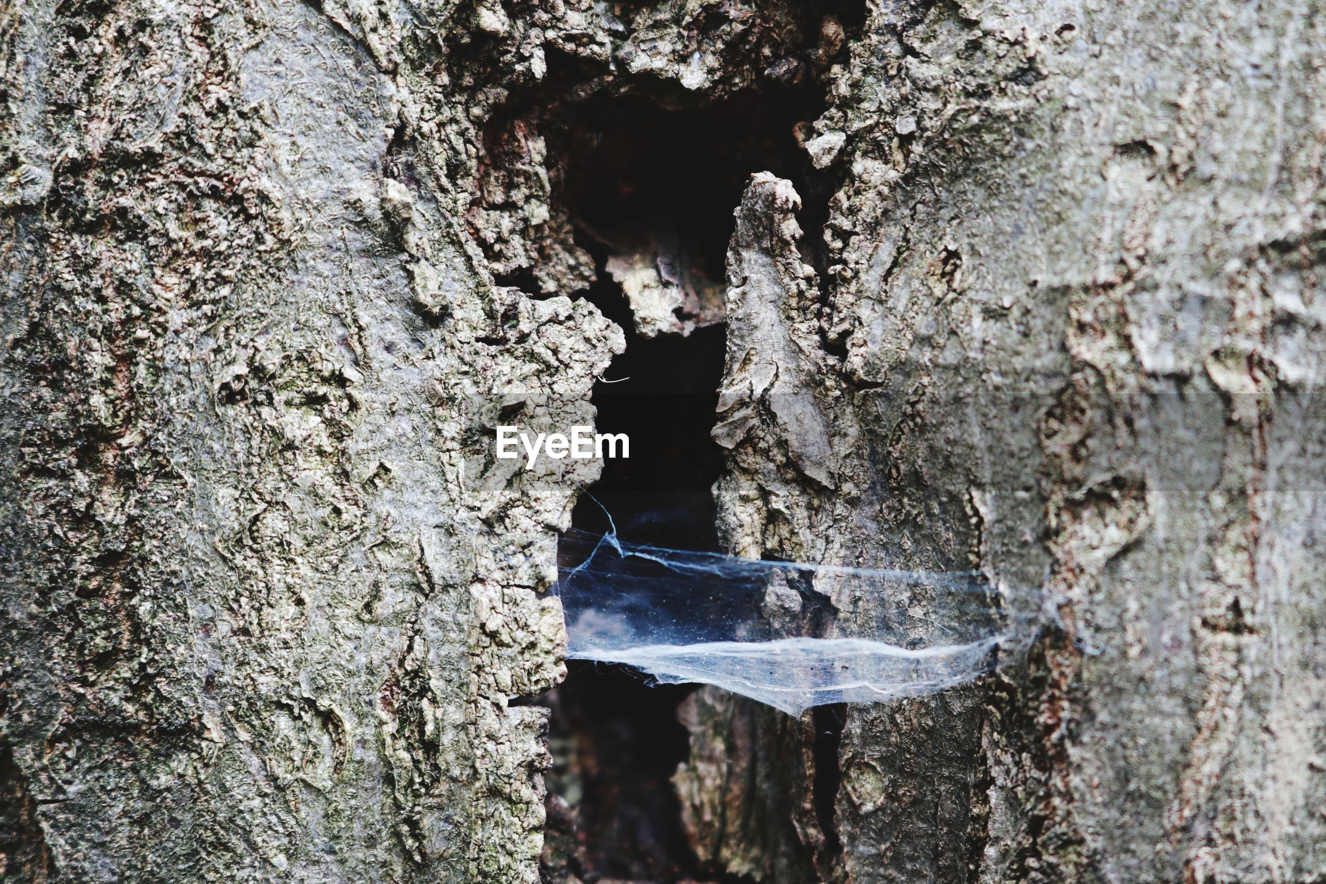 CLOSE-UP OF A INSECT ON TREE TRUNK