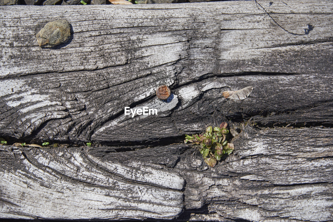 HIGH ANGLE VIEW OF TREE TRUNK WITH ROCKS