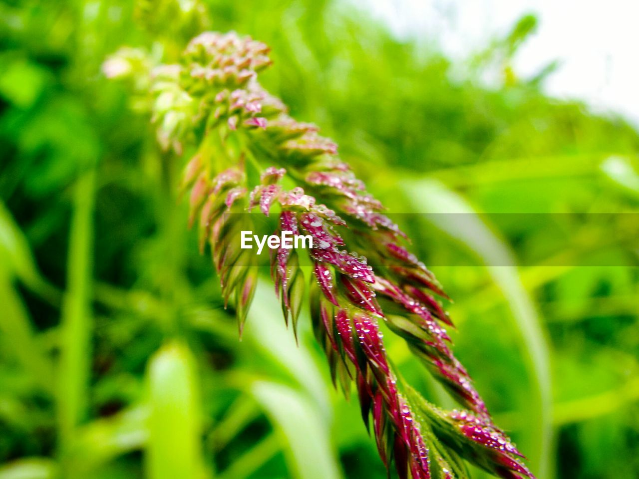 growth, green color, plant, close-up, beauty in nature, no people, freshness, nature, selective focus, focus on foreground, day, fragility, vulnerability, outdoors, flower, field, plant part, land, leaf, tranquility, purple