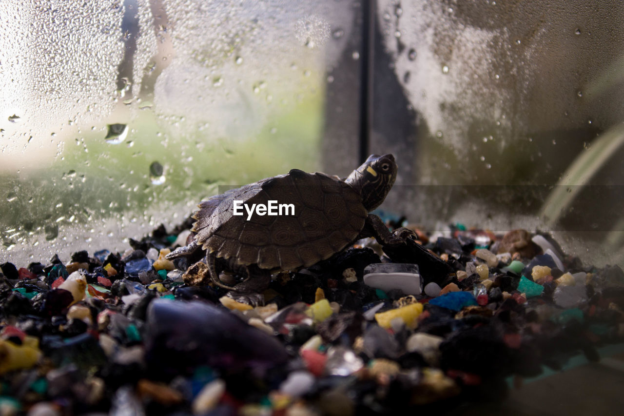 animal themes, animal, one animal, turtle, water, animal wildlife, vertebrate, nature, reptile, animals in the wild, selective focus, close-up, day, outdoors, no people, rock, shell, wet, animal shell, flowing water