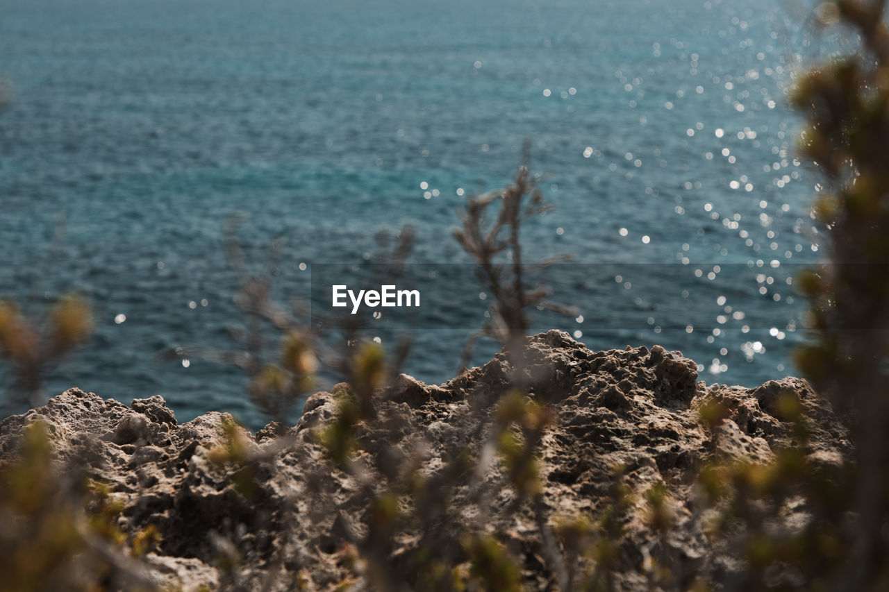 water, sea, selective focus, nature, beauty in nature, day, no people, tranquility, plant, scenics - nature, land, rock, beach, growth, tranquil scene, close-up, outdoors, rock - object, solid