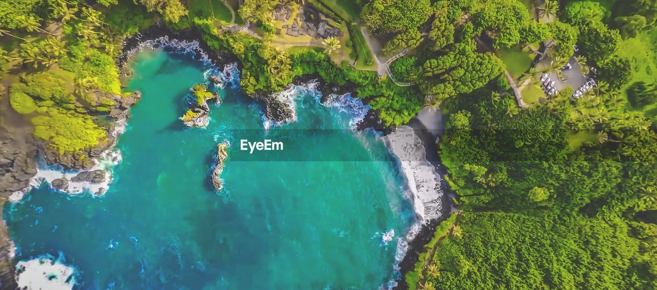 HIGH ANGLE VIEW OF SEA AMIDST PLANTS