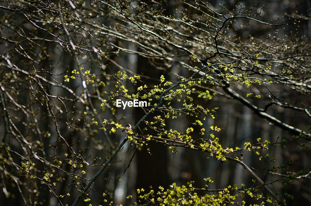 plant, growth, focus on foreground, tree, nature, no people, beauty in nature, day, branch, outdoors, tranquility, close-up, selective focus, fragility, drop, plant part, sunlight, water, green color