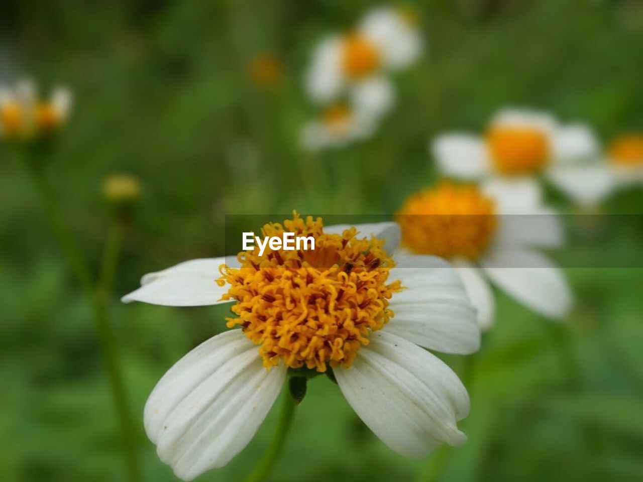 flower, petal, fragility, freshness, flower head, growth, nature, beauty in nature, focus on foreground, plant, blooming, day, no people, close-up, outdoors