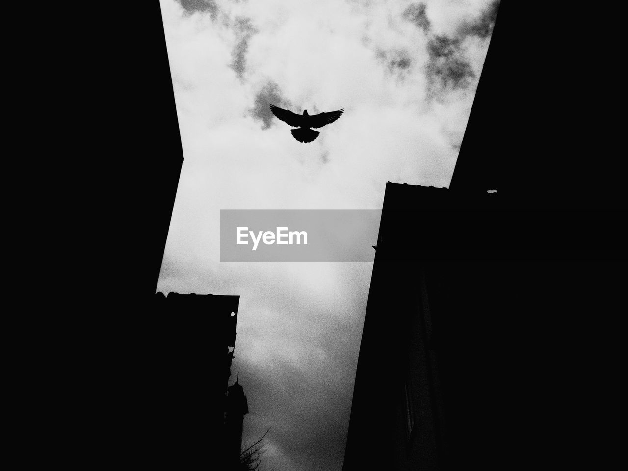 low angle view, flying, building exterior, architecture, built structure, sky, building, no people, animal themes, vertebrate, animal, nature, silhouette, bird, mid-air, city, one animal, outdoors, cloud - sky, animal wildlife, flight, skyscraper