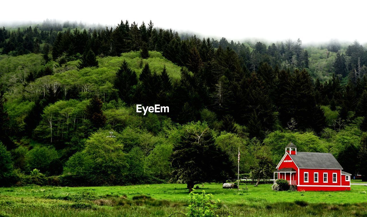 SCENIC VIEW OF TREES AND HOUSES ON FIELD AGAINST SKY