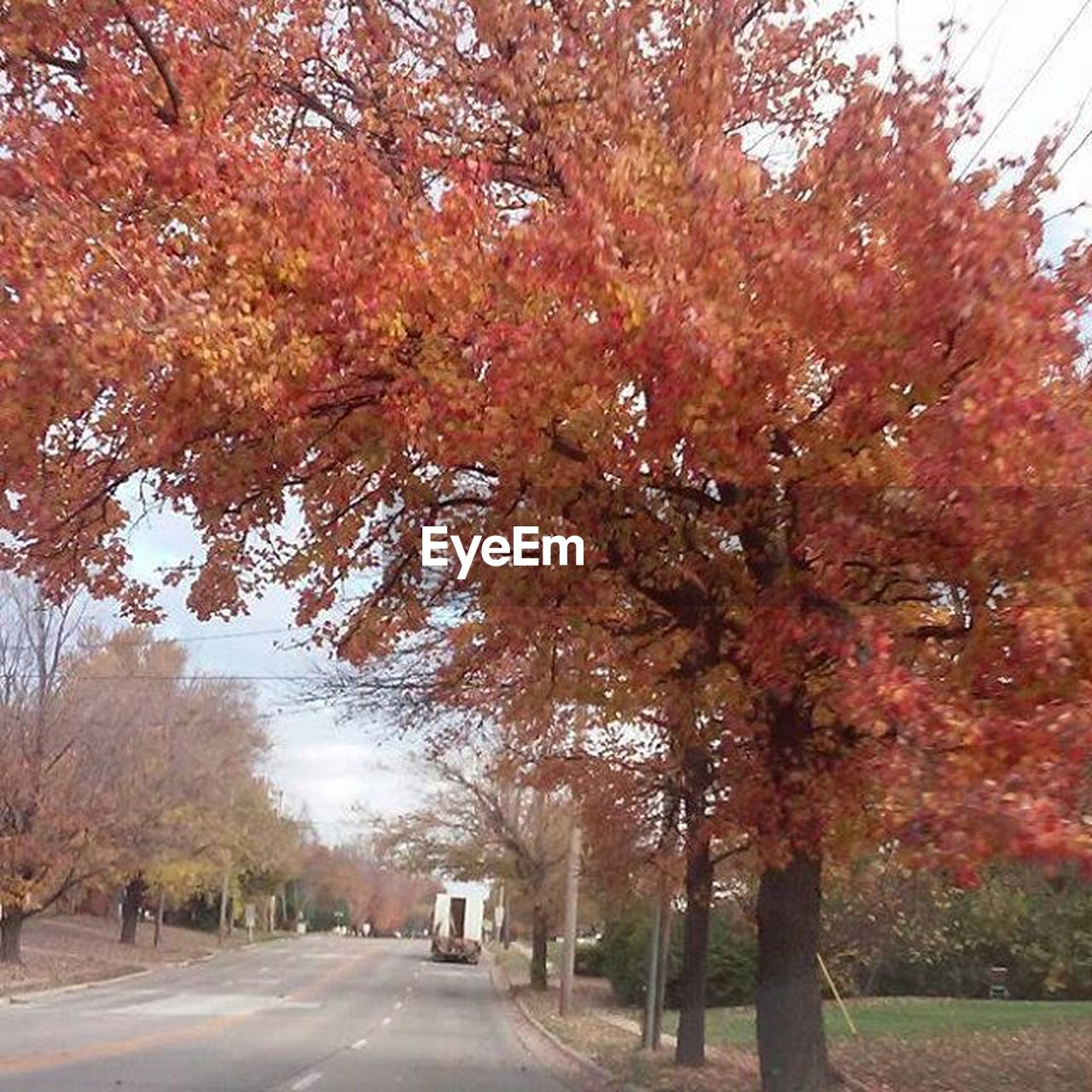 tree, autumn, change, nature, leaf, beauty in nature, tranquility, outdoors, scenics, day, street, park - man made space, growth, road, tranquil scene, branch, no people, red, sky