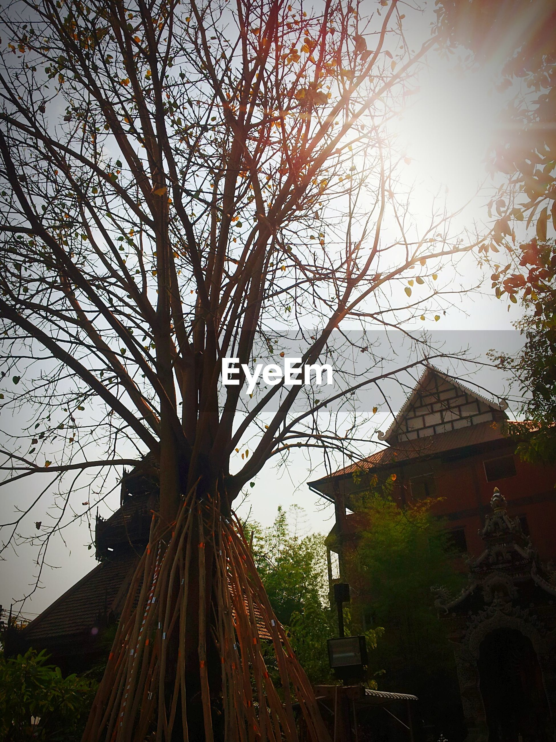 architecture, building exterior, built structure, tree, low angle view, house, sunlight, sun, sky, sunbeam, bare tree, branch, residential structure, lens flare, outdoors, residential building, growth, nature, no people, sunset