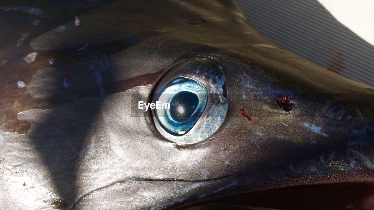 eye, one person, close-up, real people, human body part, body part, human eye, sensory perception, reflection, eyesight, eyeball, day, men, unrecognizable person, vertebrate, indoors, eyelash, fish, iris - eye, animal eye, human face
