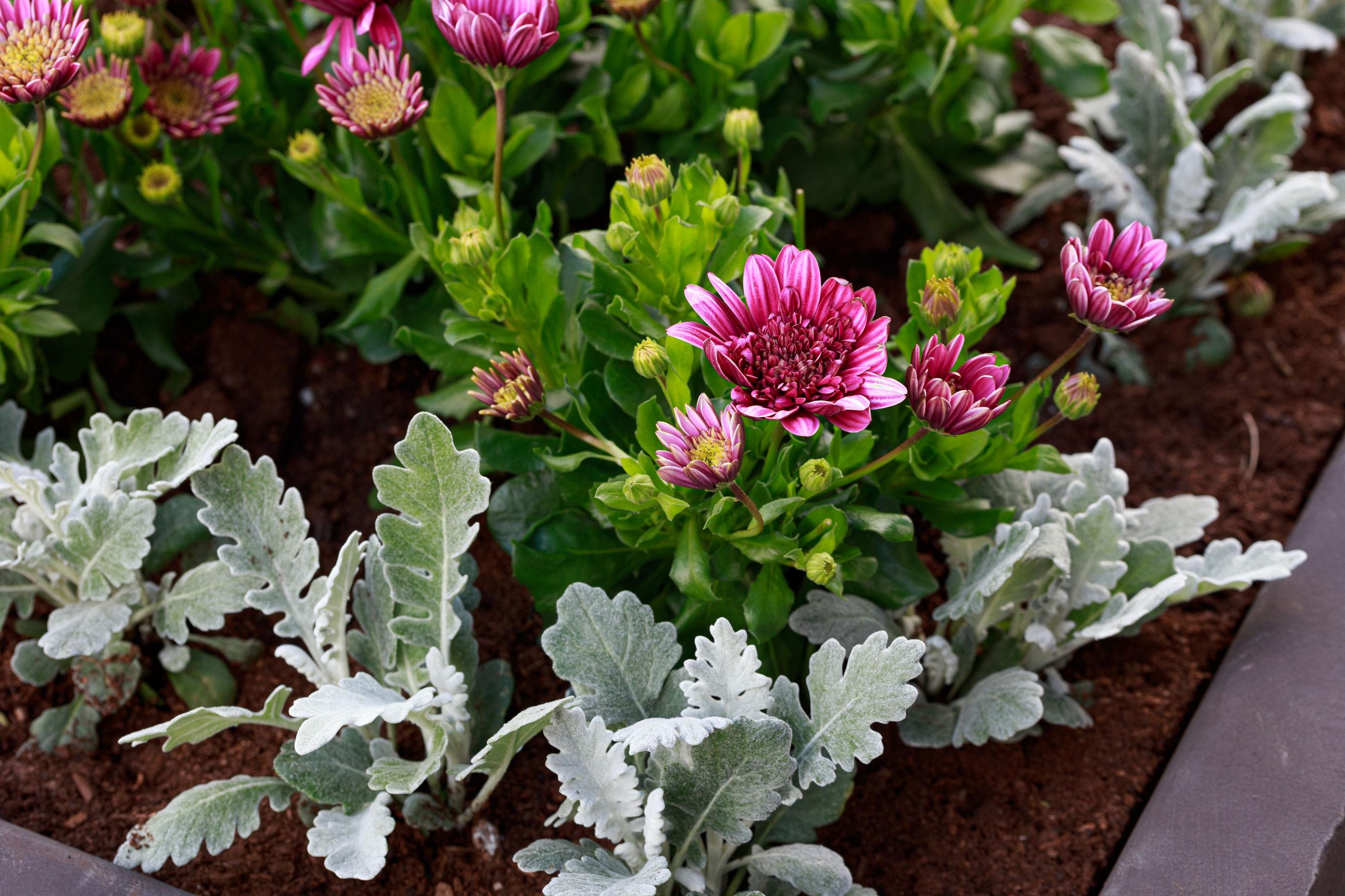 Various plants in the garden