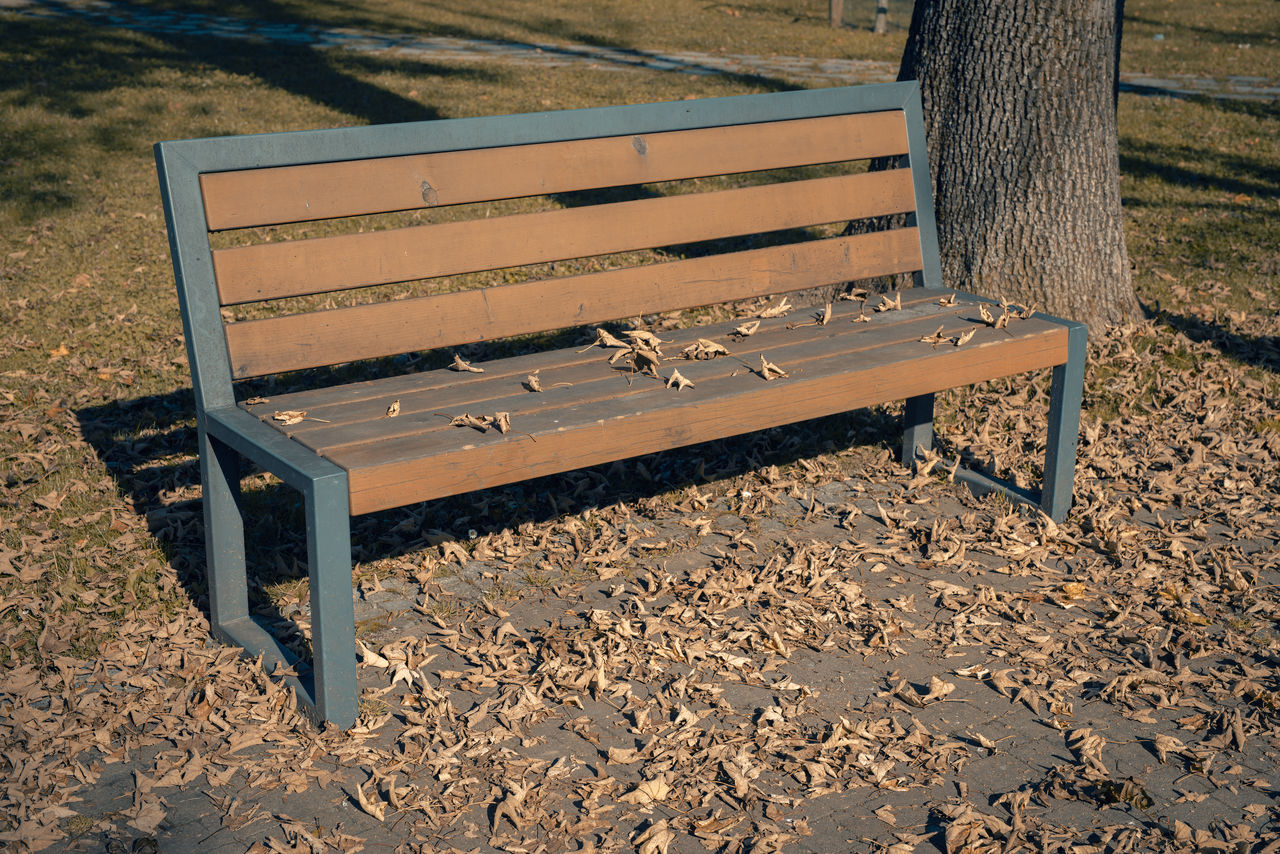 bench, seat, wood - material, empty, park, park bench, land, nature, day, absence, field, park - man made space, no people, sunlight, tree, outdoors, high angle view, music, tree trunk, brown