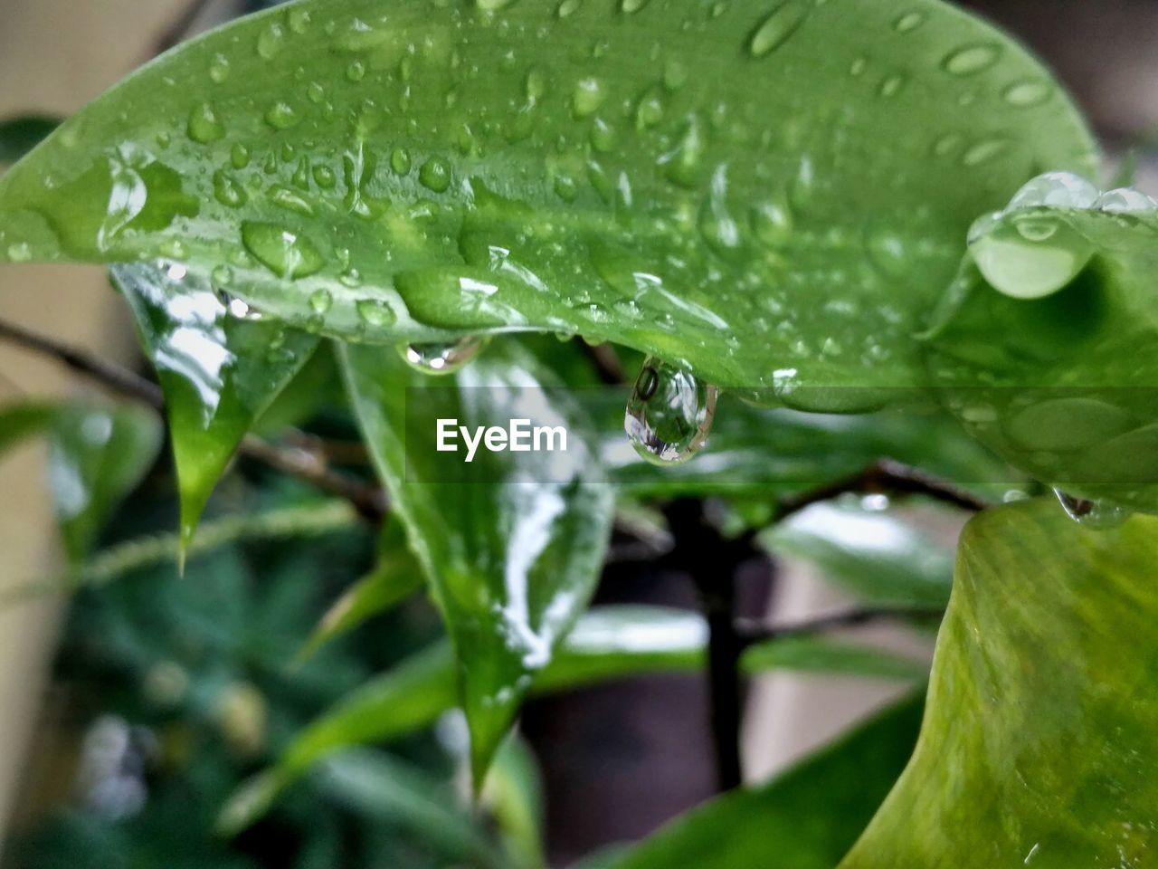 leaf, drop, green color, water, wet, close-up, nature, freshness, one animal, no people, plant, animal themes, growth, animals in the wild, raindrop, day, outdoors, beauty in nature, fragility