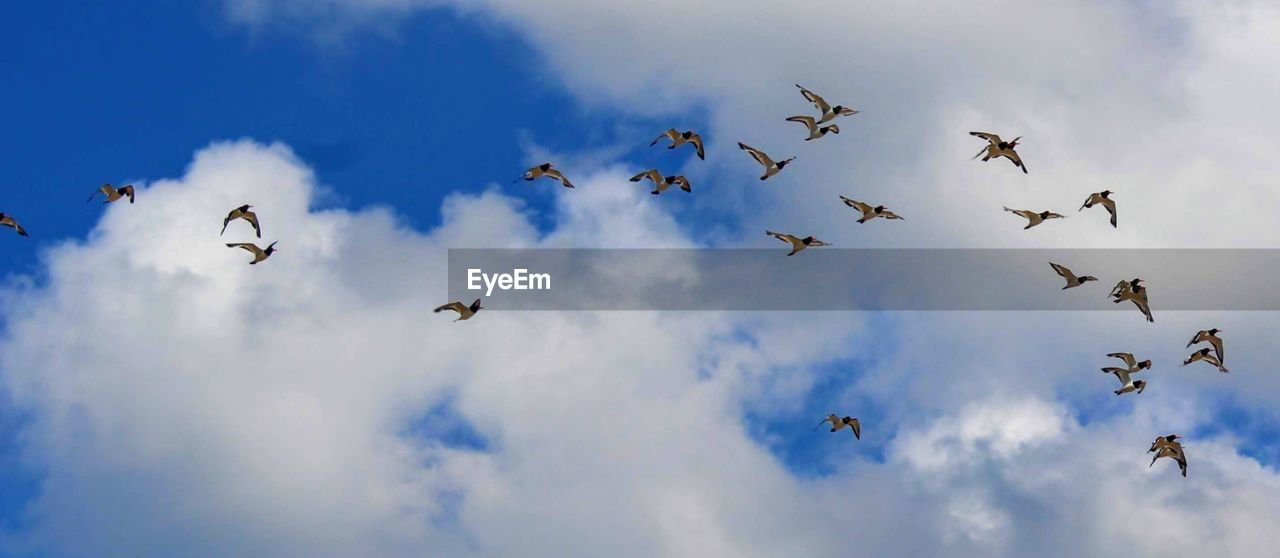 flying, cloud - sky, low angle view, sky, animal wildlife, group of animals, animal, vertebrate, animals in the wild, animal themes, mid-air, bird, large group of animals, no people, nature, spread wings, flock of birds, blue, motion, day