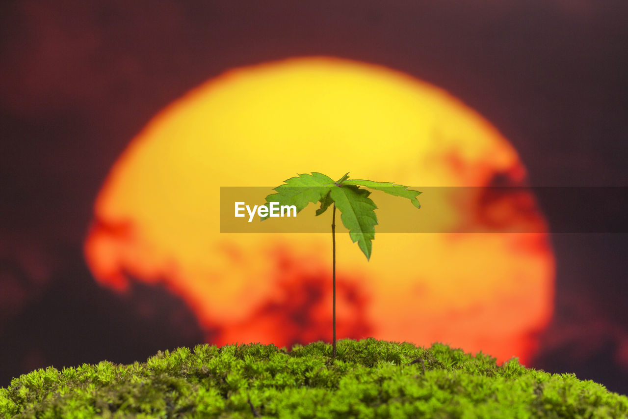 plant, leaf, green color, plant part, close-up, nature, growth, beauty in nature, orange color, no people, selective focus, outdoors, focus on foreground, freshness, plant stem, day, sky, green, tranquility
