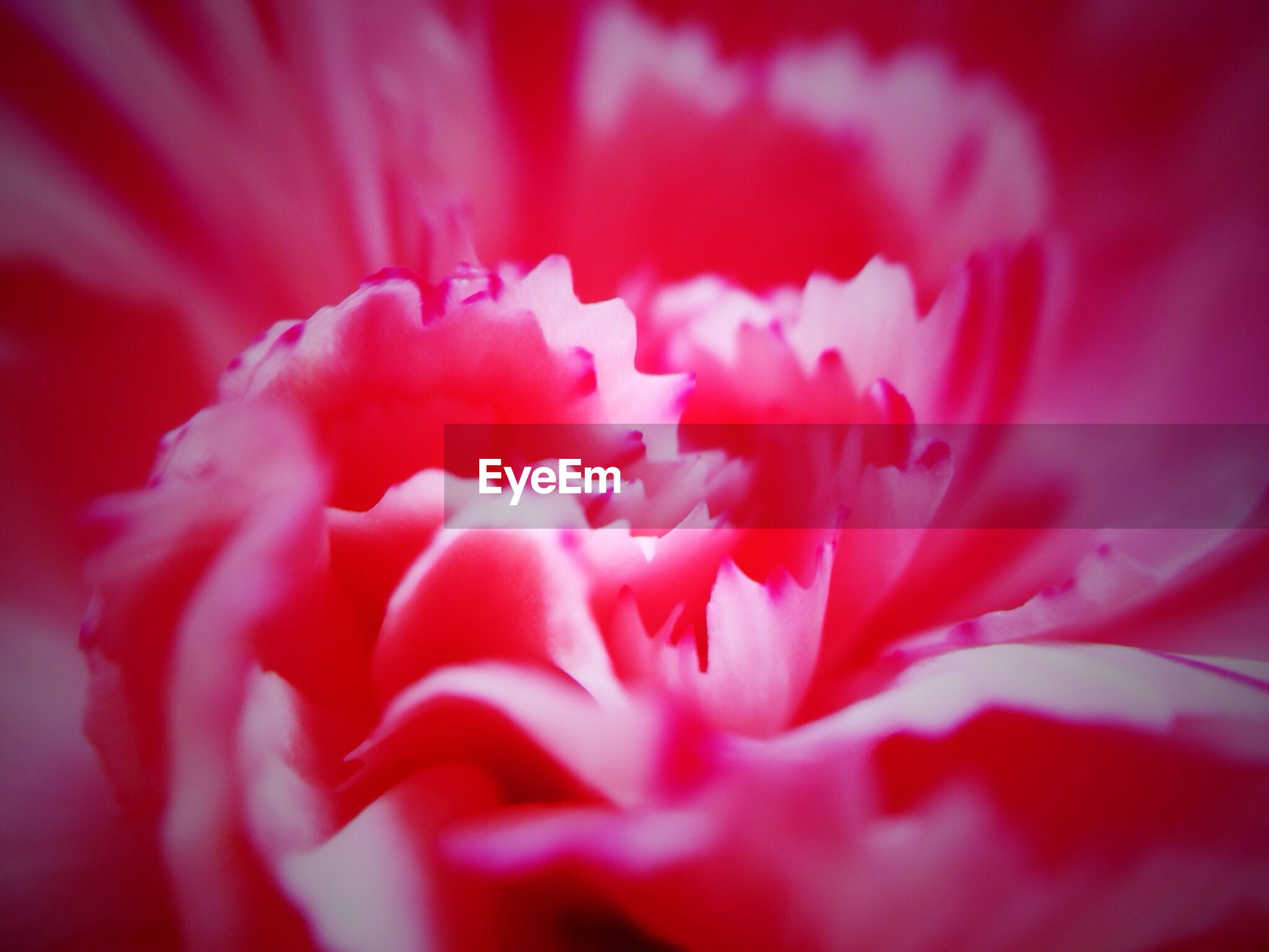Detail shot of a flower