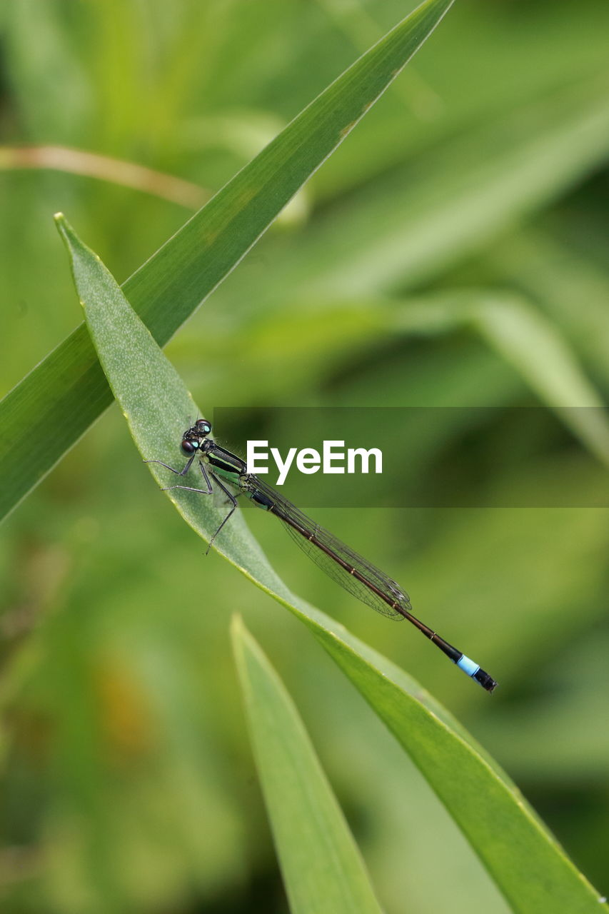 insect, invertebrate, animal themes, animals in the wild, animal wildlife, one animal, green color, animal, plant, focus on foreground, plant part, nature, damselfly, leaf, day, close-up, growth, no people, grass, animal wing, outdoors, blade of grass