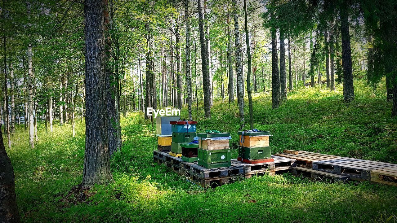 tree, plant, tree trunk, trunk, land, nature, forest, woodland, grass, green color, growth, no people, container, day, insect, beauty in nature, apiculture, animal themes, bee, invertebrate, outdoors