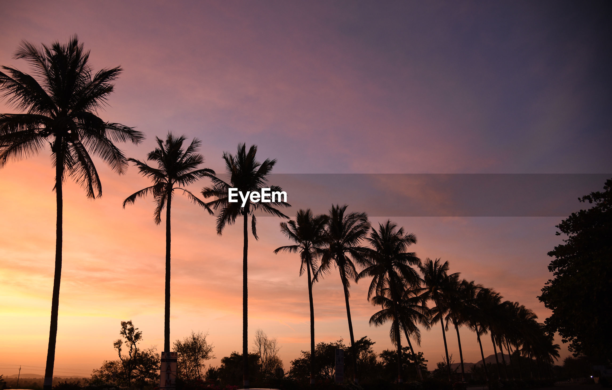SILHOUETTE PALM TREES AGAINST ROMANTIC SKY