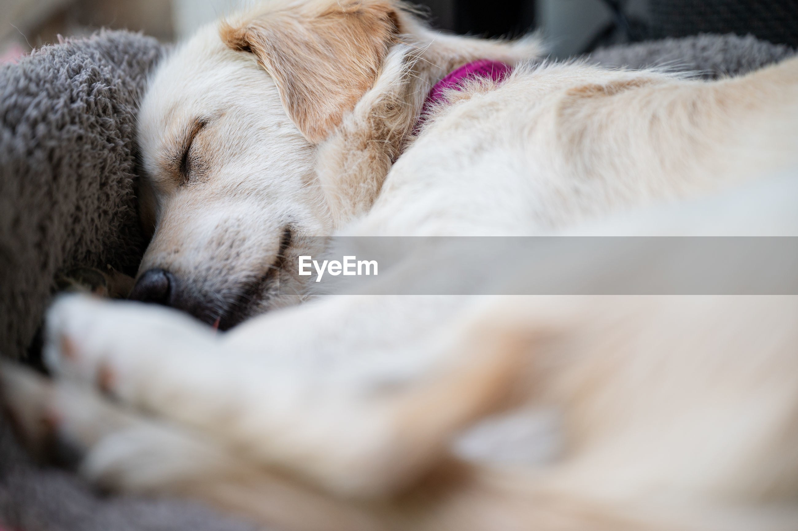 CLOSE-UP OF DOG SLEEPING IN THE BED