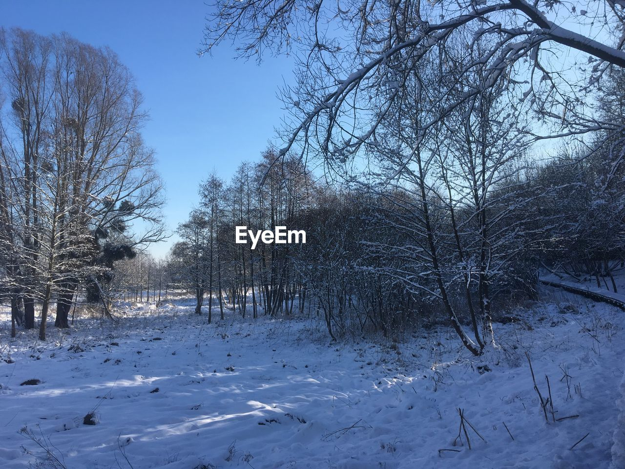 winter, snow, cold temperature, tree, bare tree, nature, tranquility, beauty in nature, weather, tranquil scene, cold, outdoors, day, scenics, no people, landscape, frozen, branch, sky