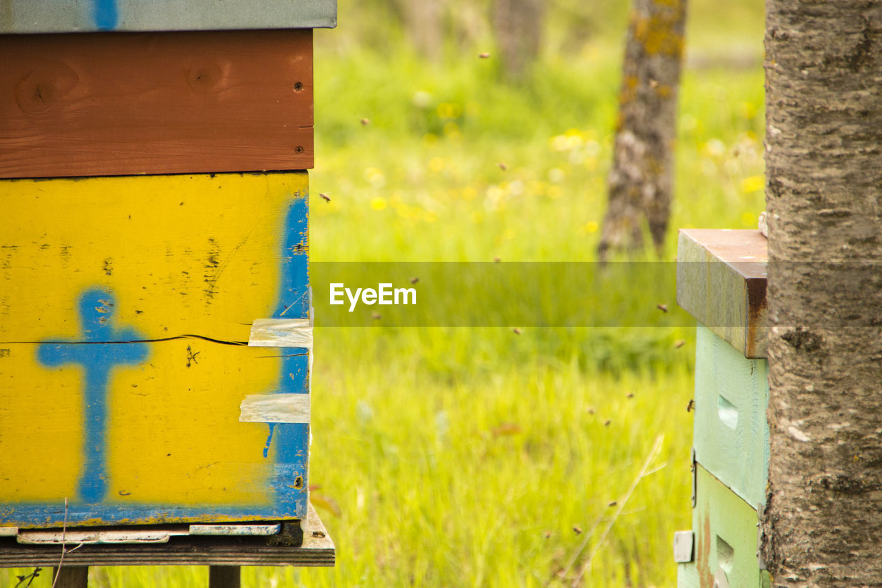 yellow, bee, wood - material, focus on foreground, nature, green color, day, container, box, plant, beehive, no people, apiculture, land, close-up, insect, field, invertebrate, outdoors, box - container