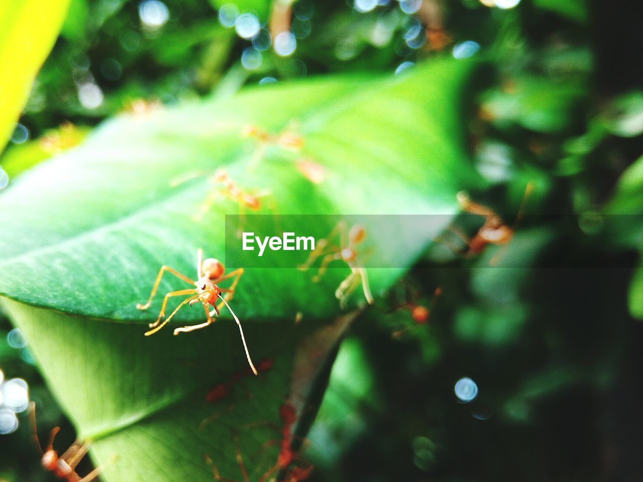 Close-up of ants on leaves