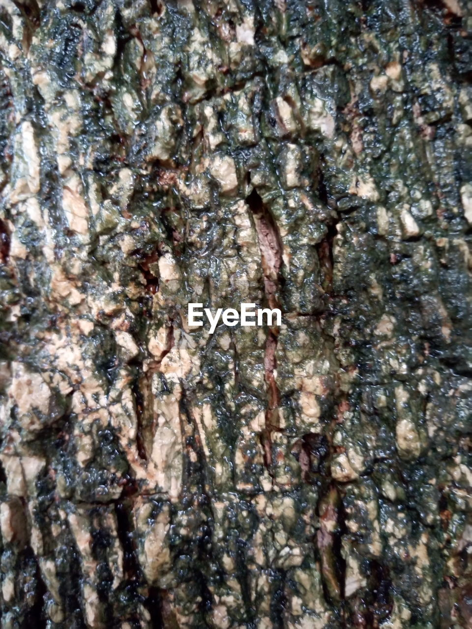 full frame, plant, tree, tree trunk, trunk, backgrounds, nature, no people, animal, close-up, textured, animal themes, outdoors, large group of animals, animals in the wild, group of animals, invertebrate, day, animal wildlife, insect, abstract backgrounds