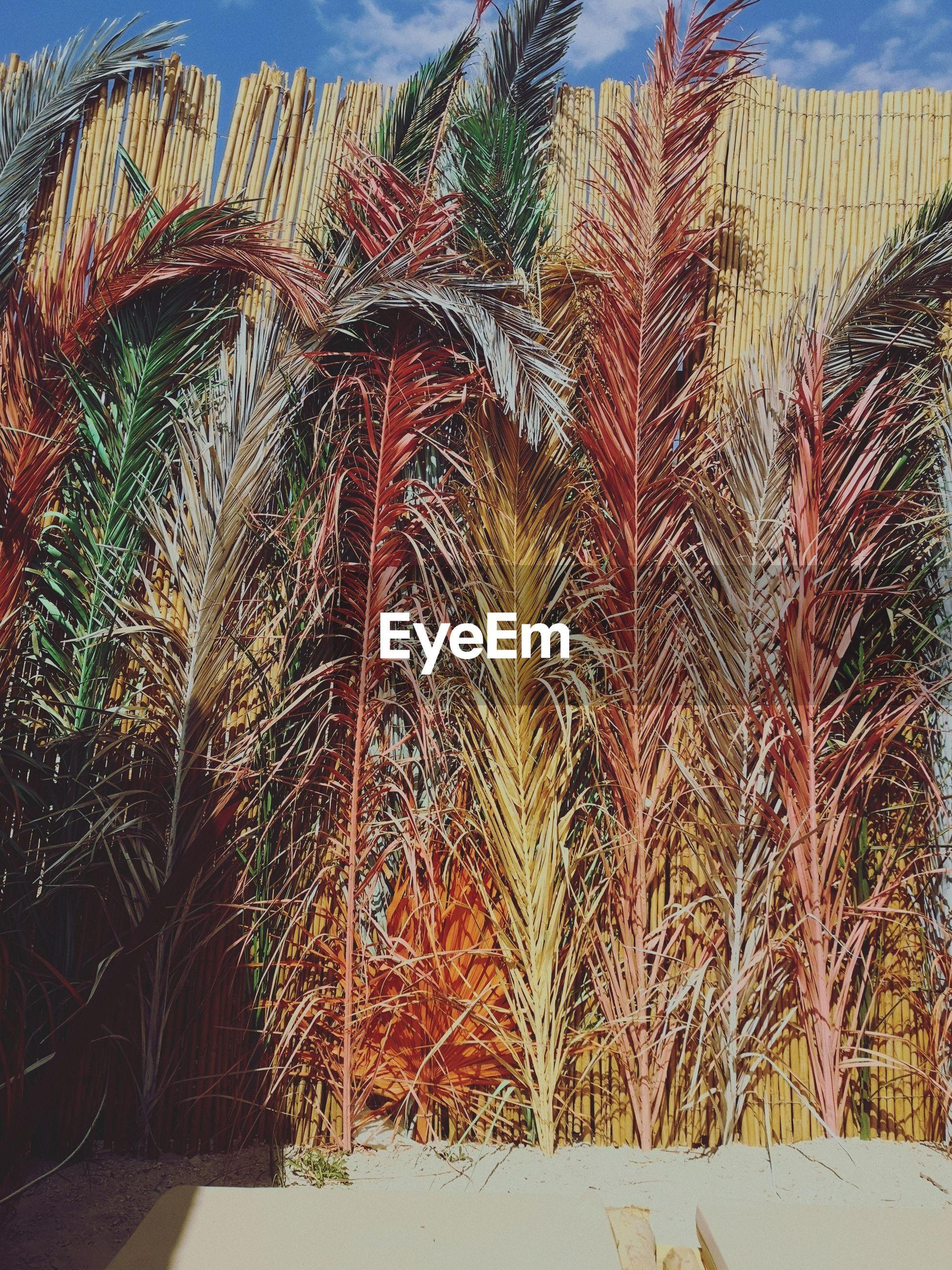 FULL FRAME SHOT OF PALM TREE IN FIELD