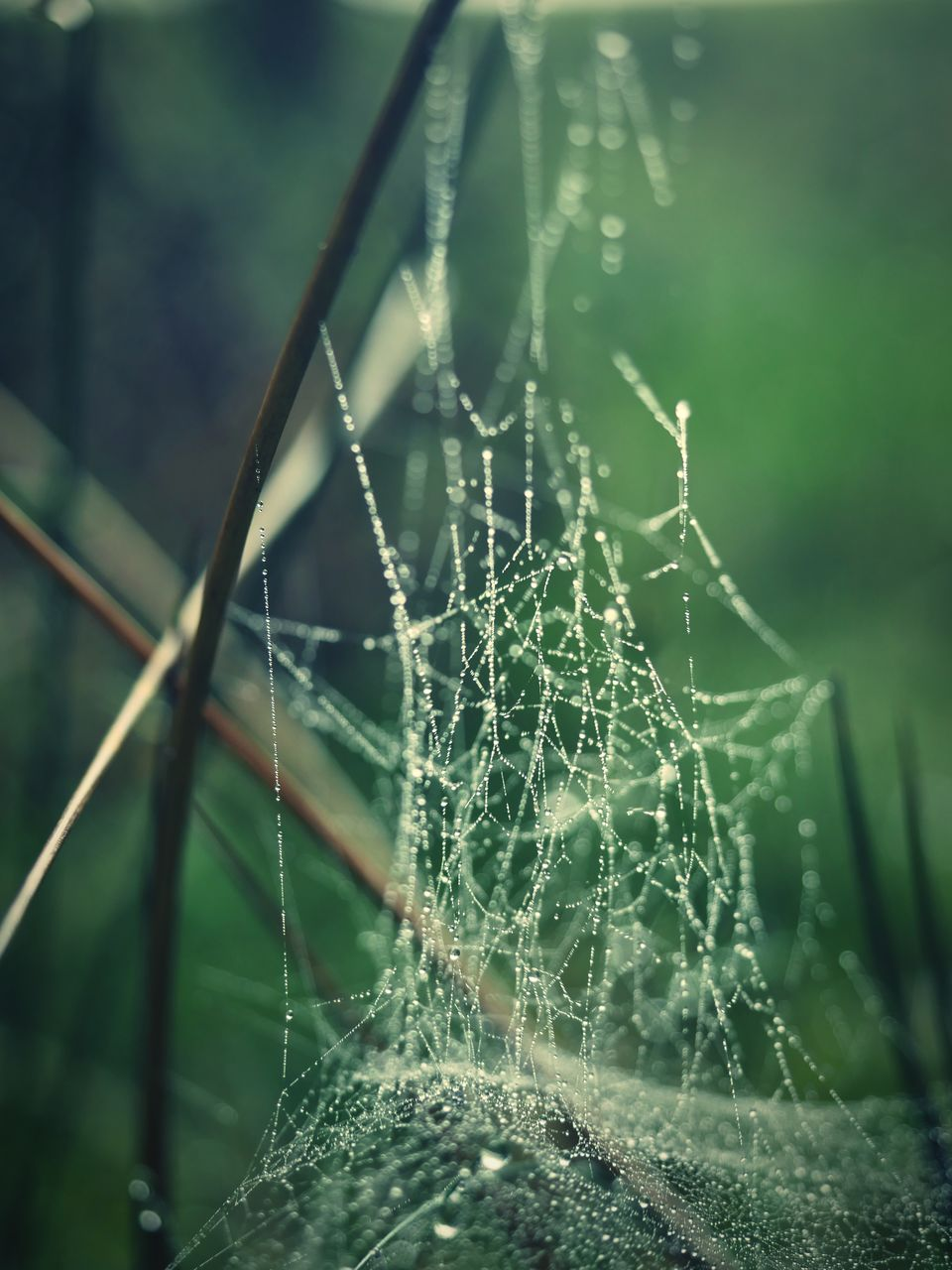 spider web, fragility, vulnerability, focus on foreground, close-up, plant, beauty in nature, no people, nature, drop, complexity, growth, day, selective focus, water, wet, outdoors, natural pattern, green color, web, dew