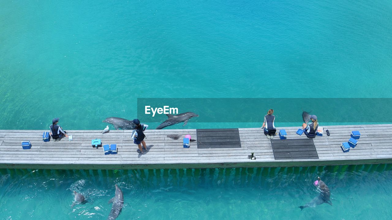 High Angle View Of People On Pier Over Dolphins Swimming In Pool