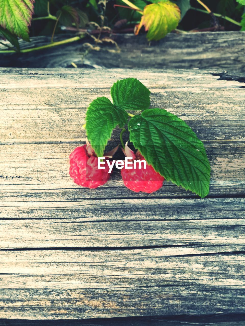 leaf, green color, red, food and drink, freshness, fruit, growth, close-up, no people, day, plant, nature, outdoors, food, healthy eating, fragility, beauty in nature