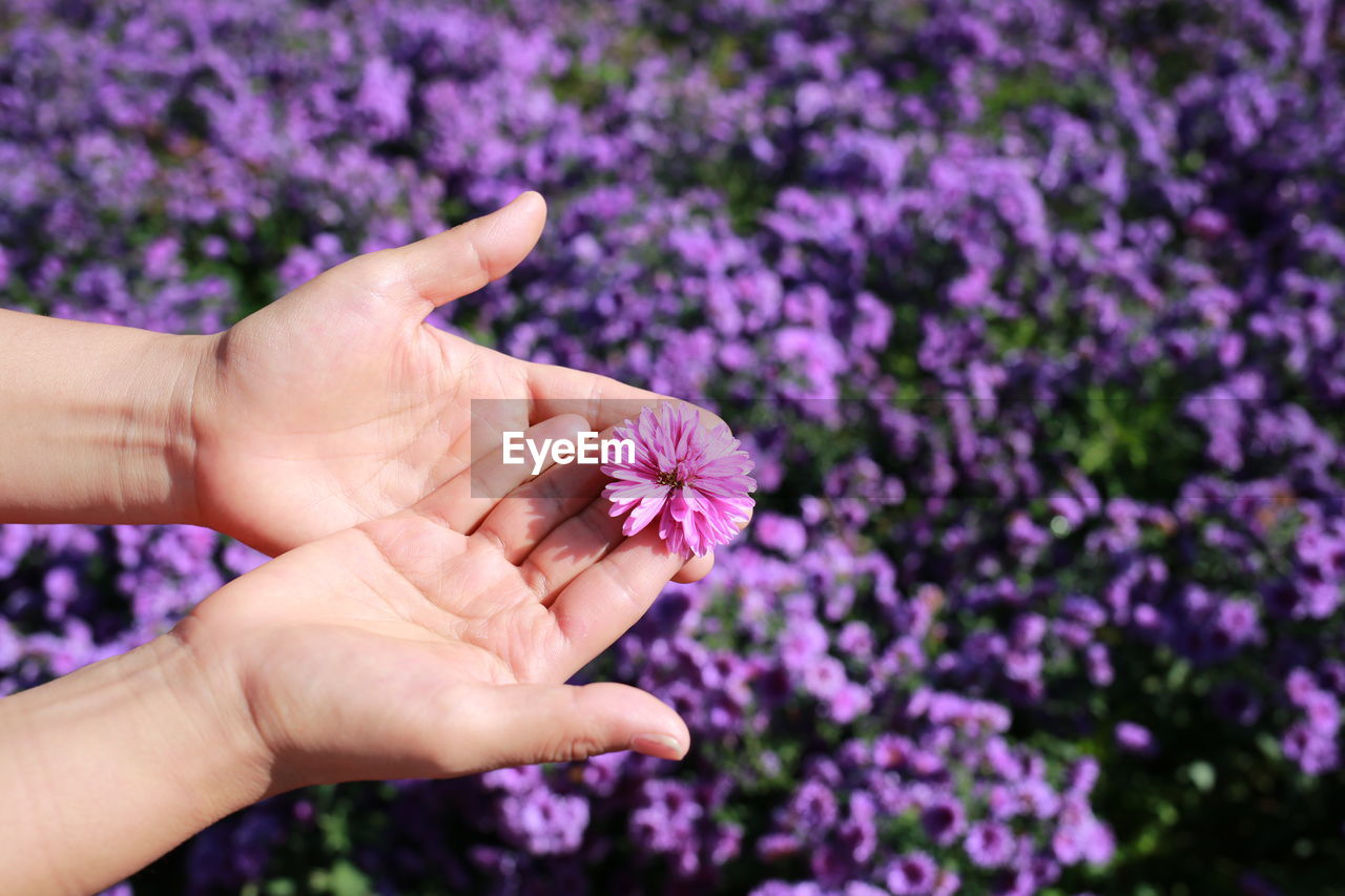 flower, flowering plant, human body part, human hand, hand, purple, freshness, plant, vulnerability, fragility, beauty in nature, one person, body part, finger, human finger, close-up, nature, real people, petal, flower head