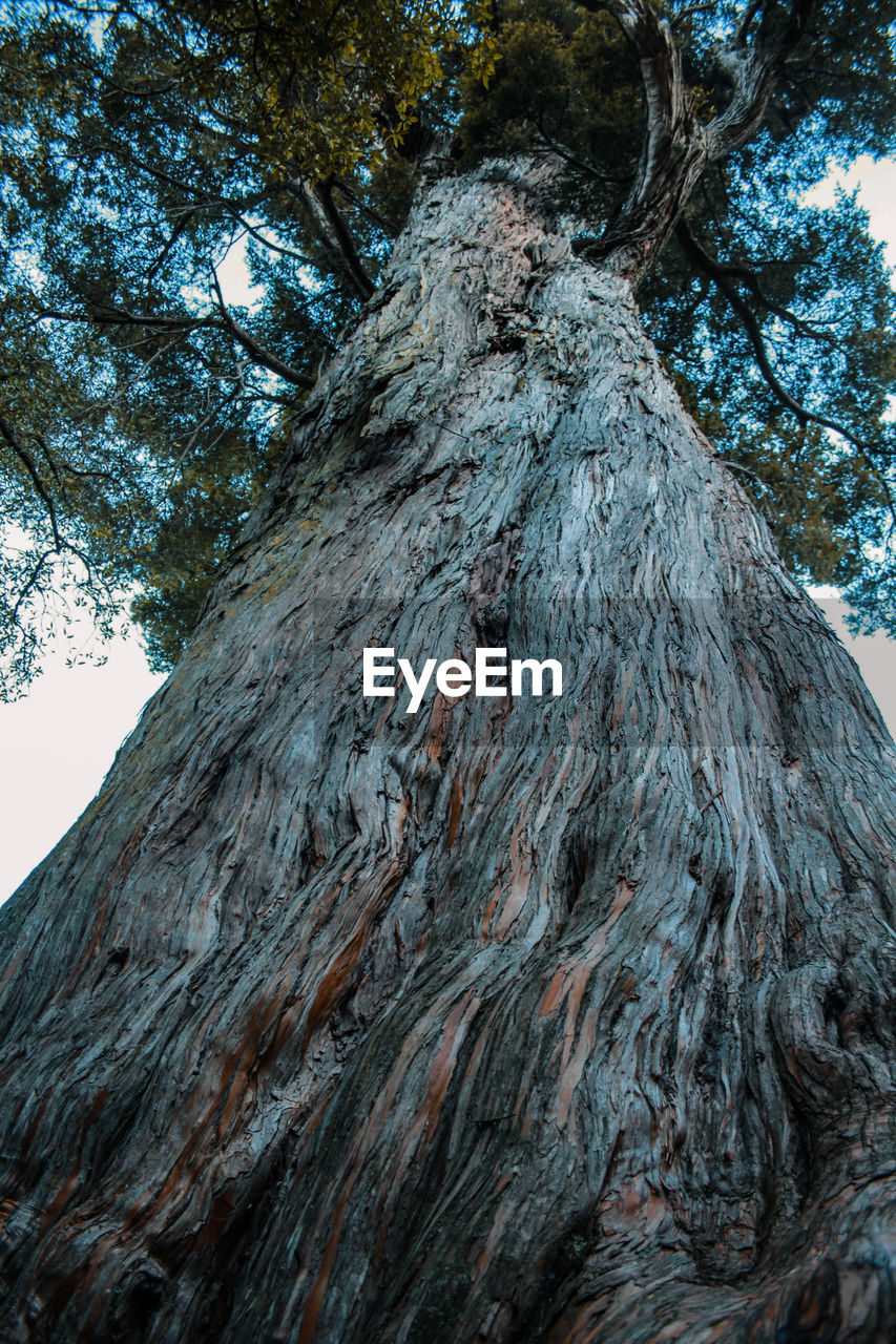 tree, plant, low angle view, nature, textured, day, tree trunk, trunk, no people, beauty in nature, outdoors, mountain, rough, land, tranquility, sky, growth, rock, geology, mountain range, bark