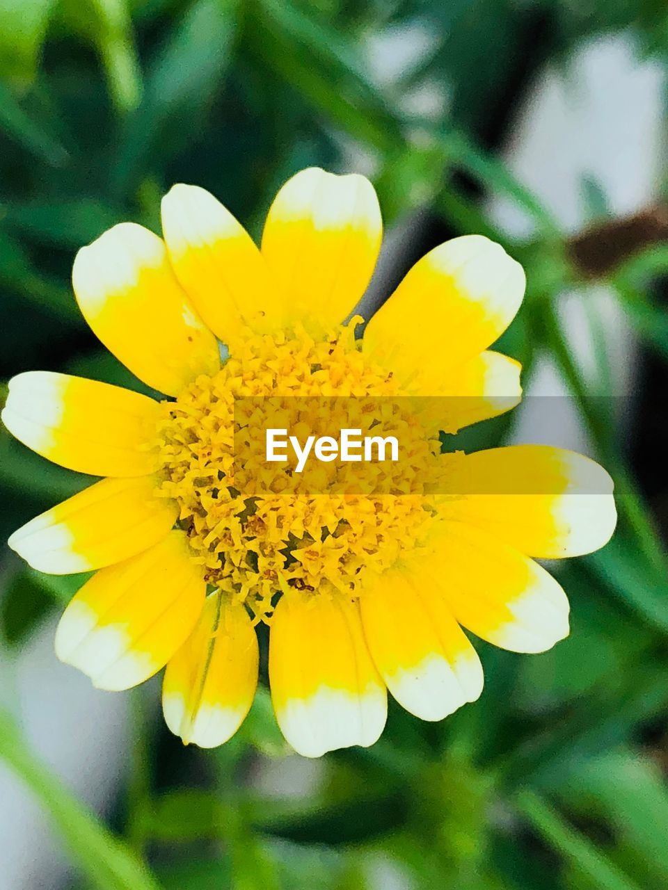 flower, yellow, flowering plant, plant, fragility, beauty in nature, vulnerability, freshness, petal, growth, close-up, inflorescence, flower head, focus on foreground, day, nature, no people, selective focus, outdoors, pollen