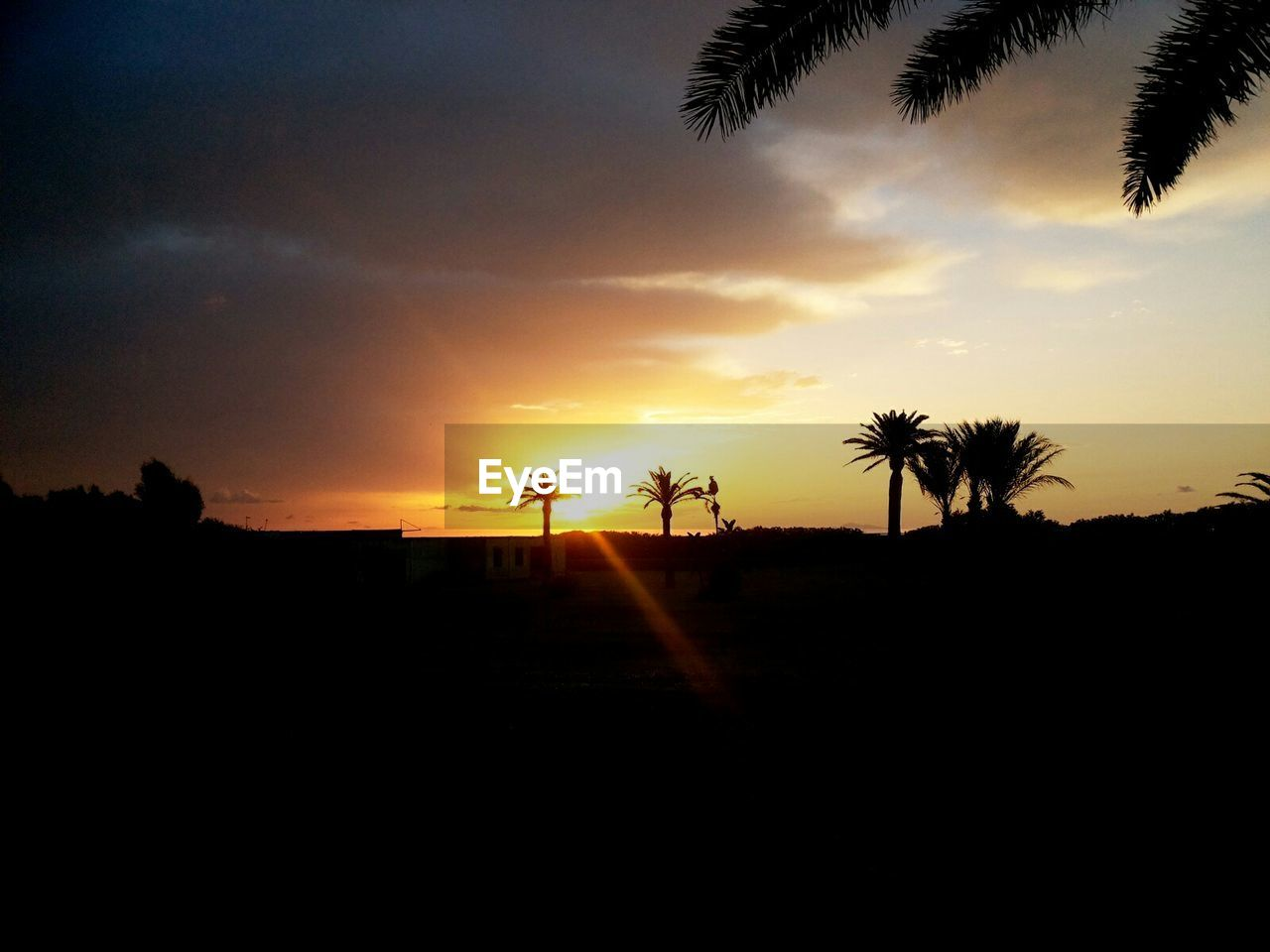 sunset, silhouette, palm tree, tree, scenics, beauty in nature, nature, tranquil scene, orange color, tranquility, sky, landscape, sun, no people, outdoors, growth, day