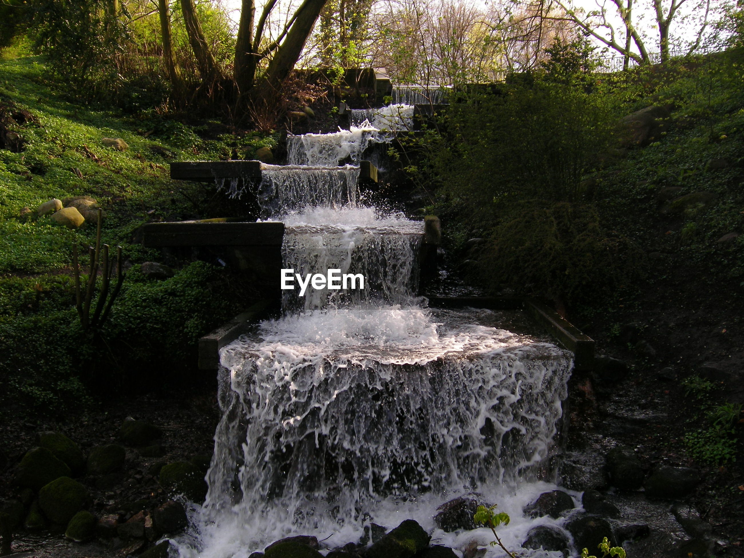 Low angle view of waterfall against trees in forest