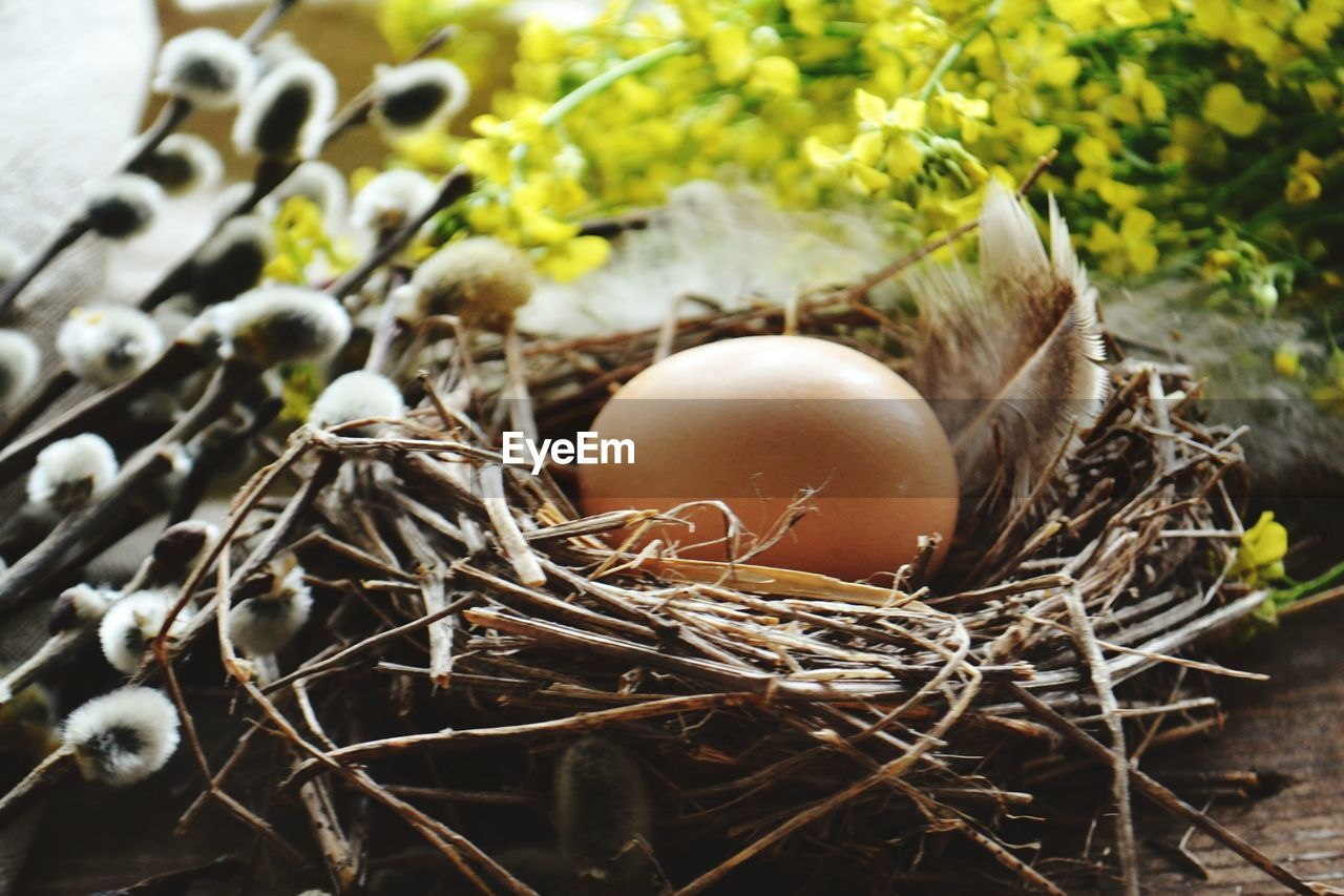 egg, animal nest, food and drink, food, nature, beginnings, no people, animal egg, day, bird nest, selective focus, new life, plant, close-up, bird, vulnerability, healthy eating, fragility, freshness, outdoors, nest egg