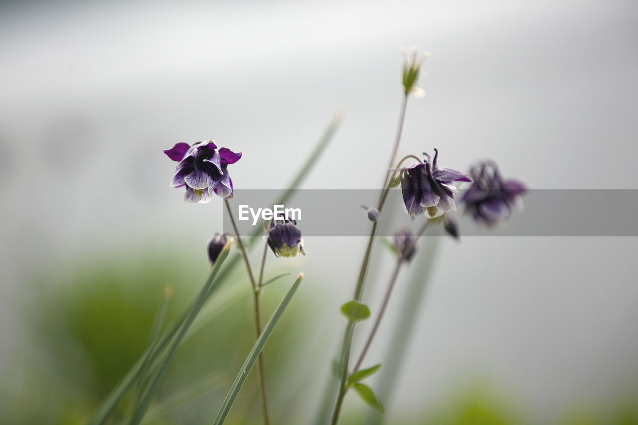 flower, fragility, nature, growth, beauty in nature, purple, selective focus, plant, petal, freshness, no people, close-up, day, flower head, outdoors