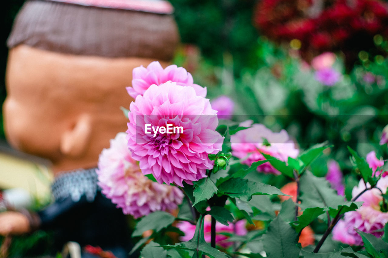 flower, flowering plant, plant, freshness, pink color, one person, beauty in nature, vulnerability, fragility, real people, close-up, lifestyles, focus on foreground, petal, day, nature, selective focus, human body part, inflorescence, flower head, purple