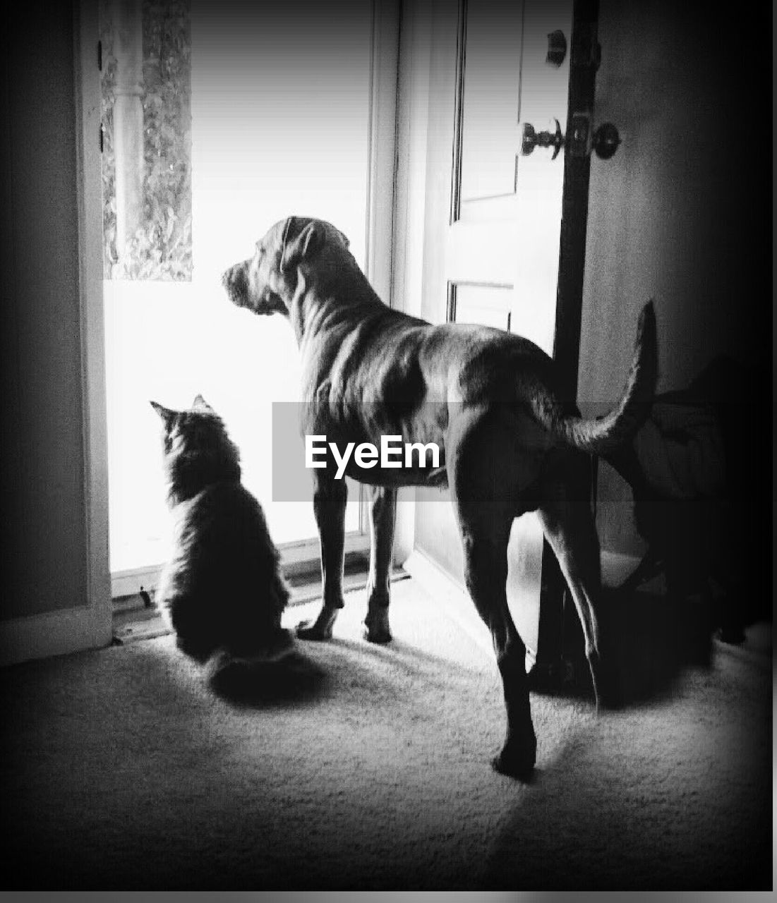 pets, animal themes, domestic animals, dog, indoors, two animals, mammal, full length, no people, home interior, day, domestic cat, togetherness