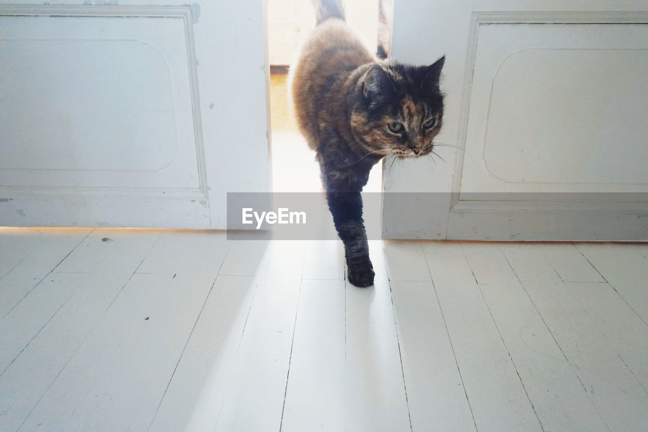 High Angle View Of Cat Standing At Doorway