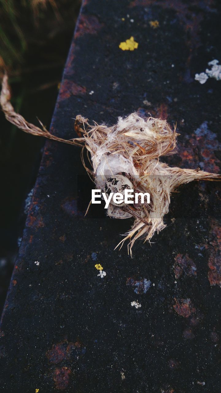 Close-Up Of Spider With Egg In Nest