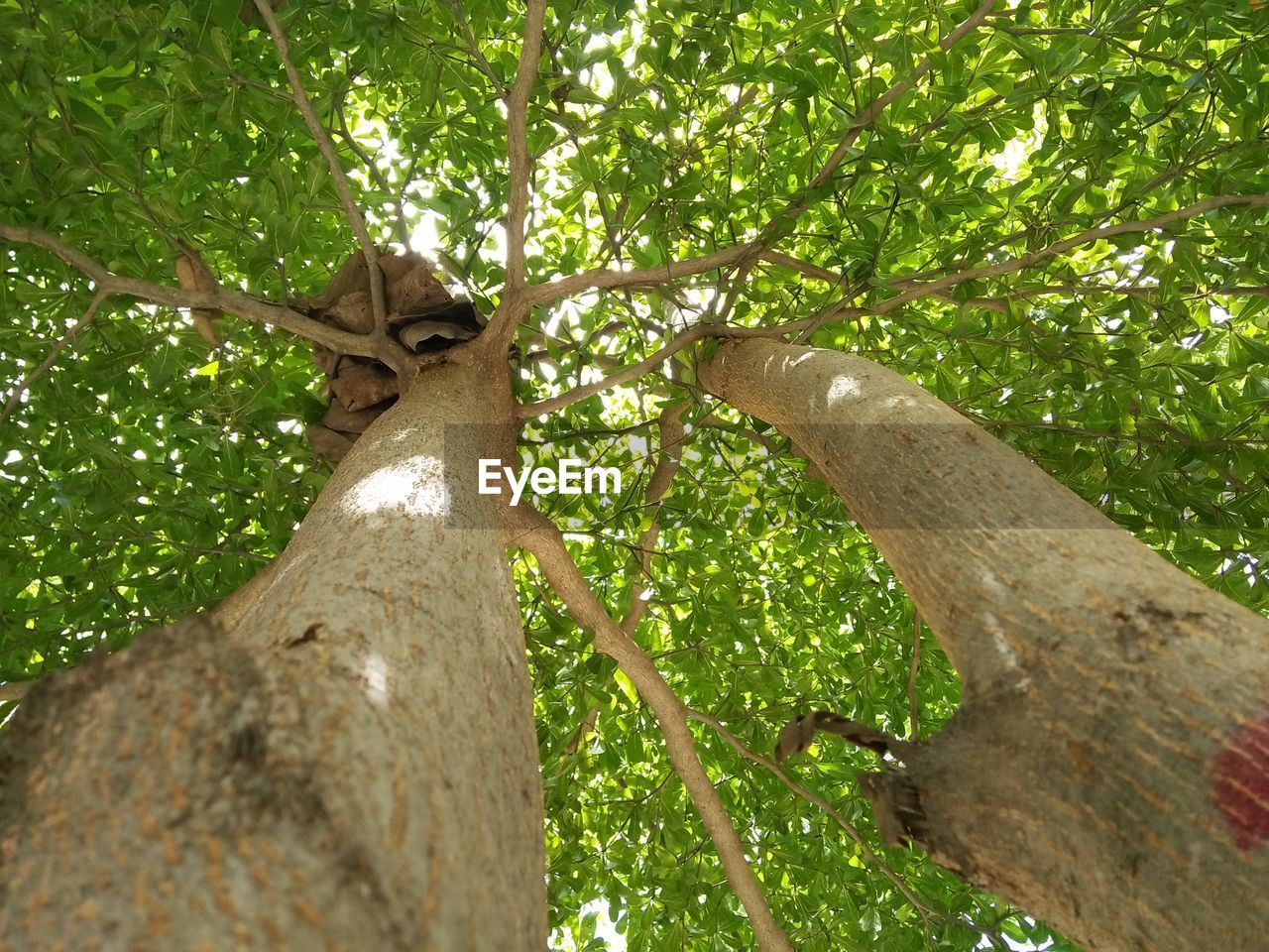 tree, plant, branch, tree trunk, low angle view, trunk, nature, growth, green color, day, no people, plant part, outdoors, forest, animal wildlife, leaf, animal, animal themes, one animal, beauty in nature