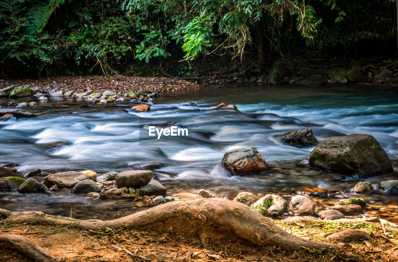 water, rock, solid, rock - object, tree, beauty in nature, forest, land, plant, nature, scenics - nature, flowing water, day, no people, motion, long exposure, tranquility, river, non-urban scene, flowing, outdoors, stream - flowing water, power in nature, pebble