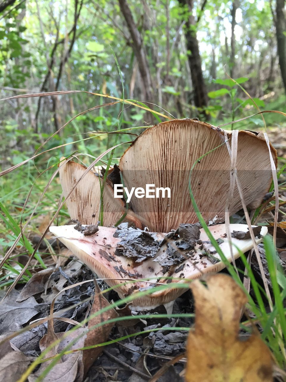 tree, land, plant, mushroom, forest, nature, fungus, growth, no people, day, toadstool, field, vegetable, wood - material, close-up, selective focus, food, plant part, leaf, outdoors, woodland