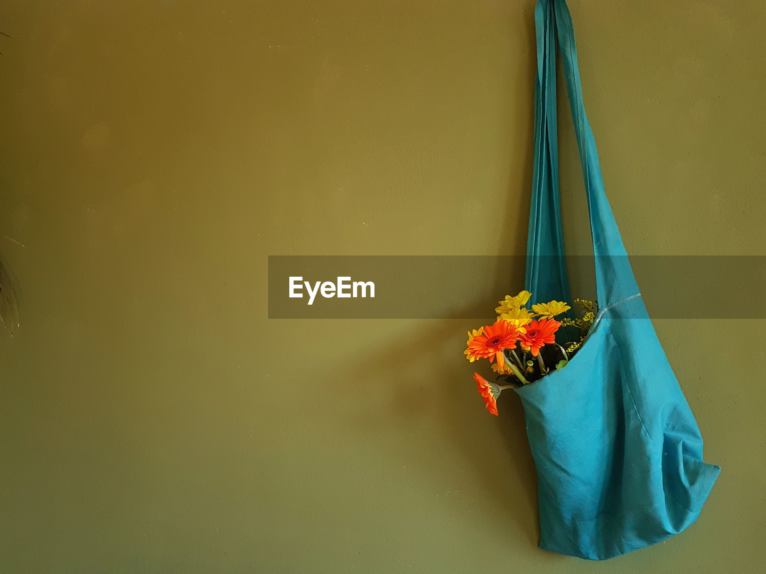 Close-up of flowers in blue bag against green wall