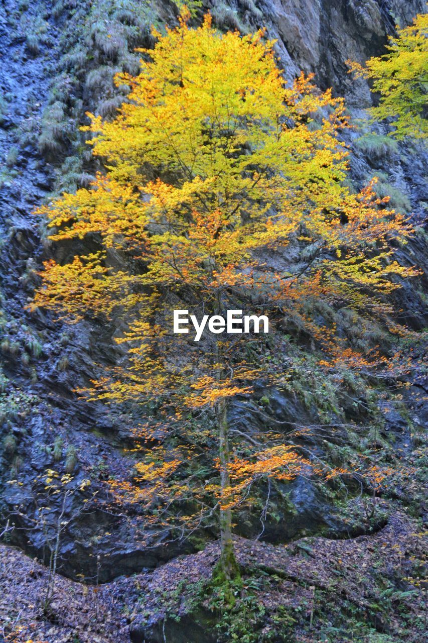 tree, nature, autumn, forest, leaf, day, no people, change, outdoors, beauty in nature, growth, yellow, scenics, mountain, close-up