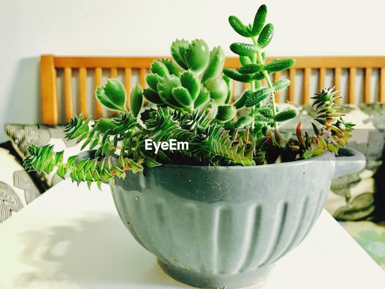 green color, potted plant, growth, plant, indoors, close-up, succulent plant, no people, nature, table, cactus, flower pot, day, beauty in nature, selective focus, plant part, botany, leaf, container, houseplant