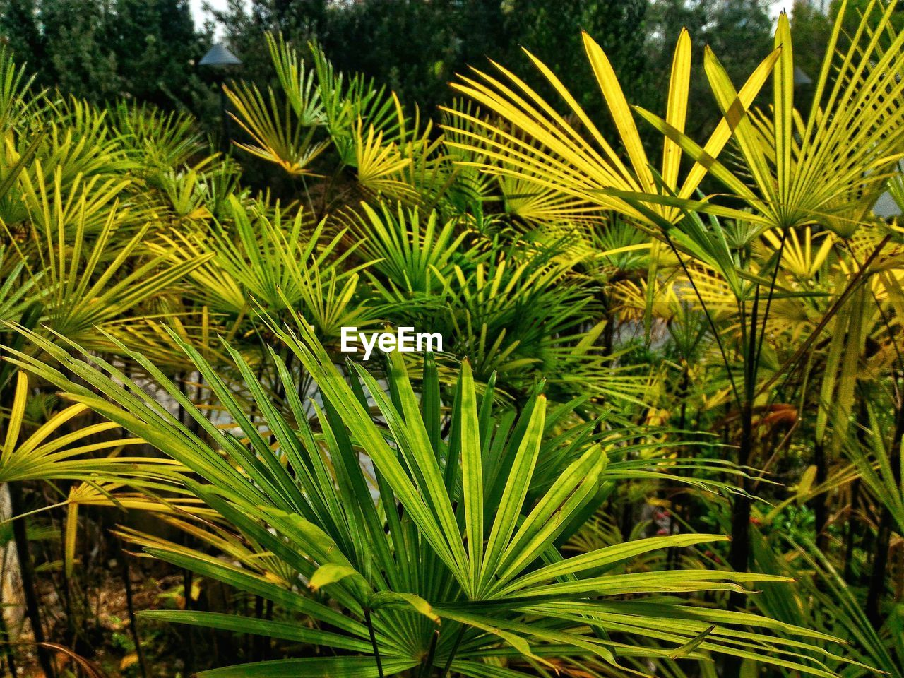 growth, green color, nature, leaf, plant, beauty in nature, no people, palm tree, outdoors, day, freshness, close-up, tree