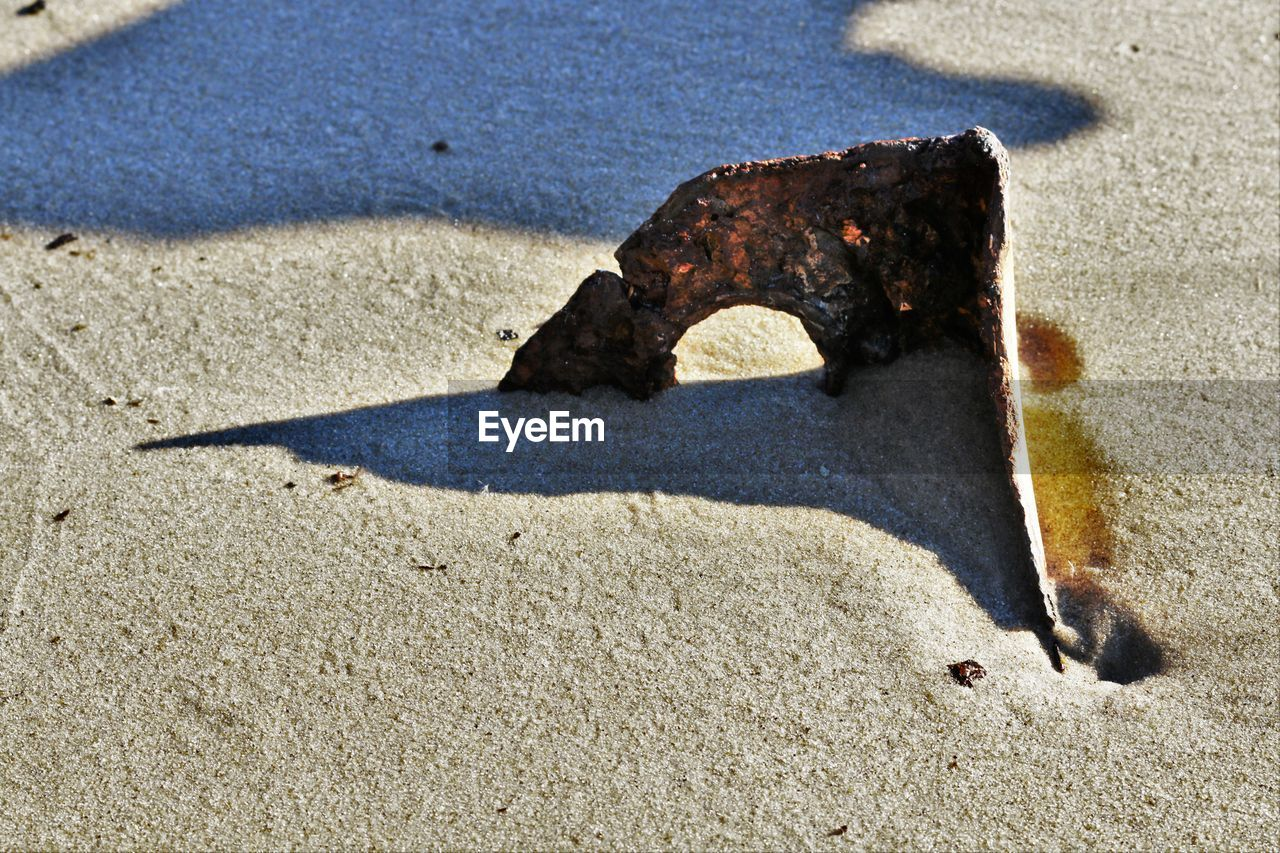 sand, beach, sunlight, shadow, no people, day, outdoors, nature, animal themes, sea, close-up, mammal